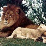 Necessidade da mansidão e da humildade para o religioso