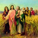 A parábola do joio e a Igreja Católica