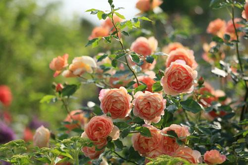 Que flores são estas, para nós, ó Filotéia, senão os bons desejos?